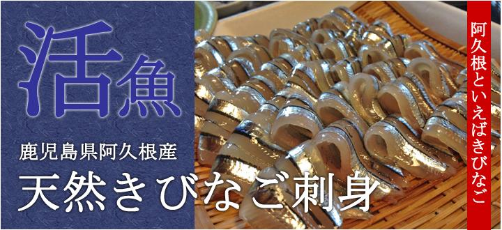 鹿児島県阿久根産天然きびなご刺身